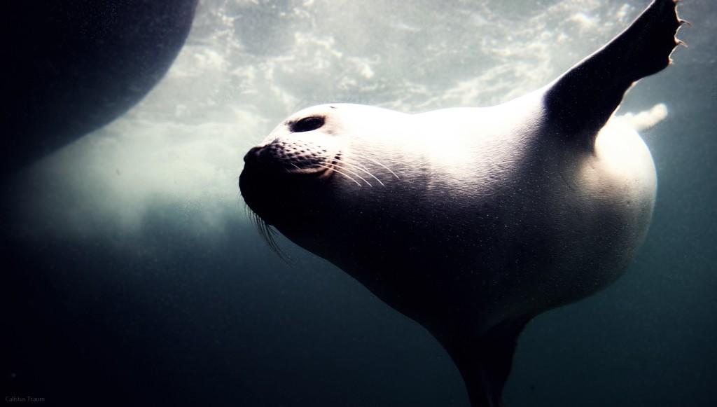 Aquarium Wilhelmshaven - Seerobben