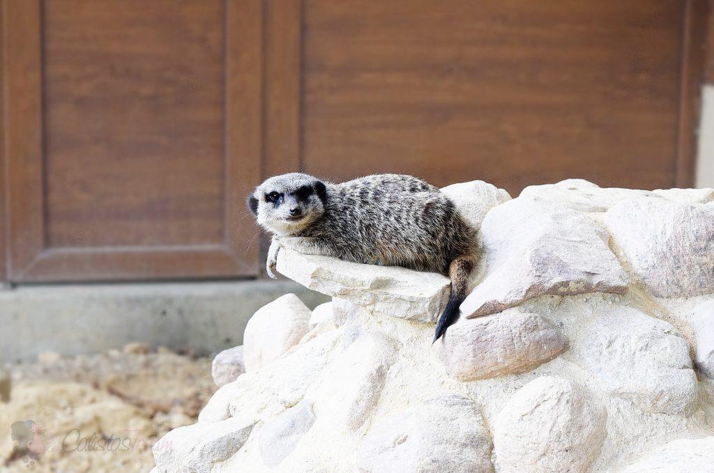 Impressionen vom Tierpark Senftenberg