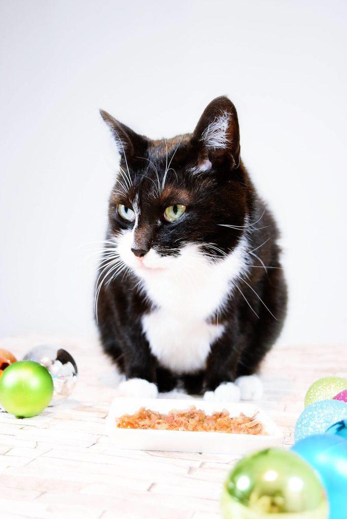 Weihnachten Mit Katzen Den Kostlichen Genussmomenten Von Gourmet