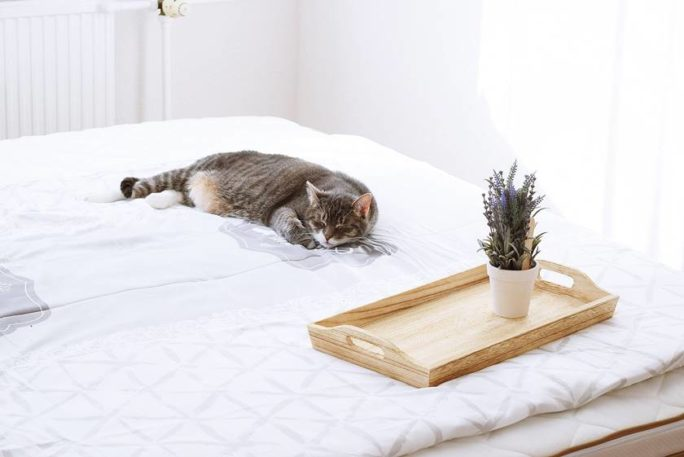 Darum ist guter Schlaf für unsere Gesundheit wichtig
