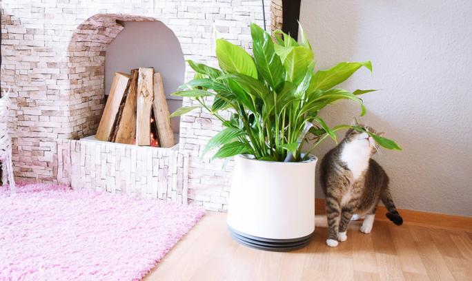 Sicherer Umgang mit Pflanzen im Katzenhaushalt